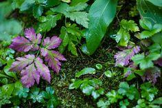 - Stadelstein Plant Fungus, Fungi, Herbs, Plants, Stones, Mushrooms, Herb, Flora, Plant