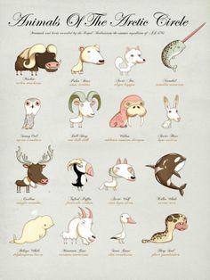 Villi Arktis. Mikä eläimistä on sinulle tutuin?  (Finnish:  Wild Arctic.  With what animal are you most familiar?)