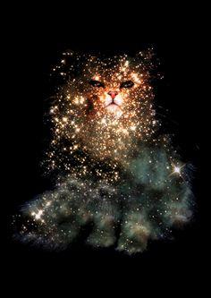 A estética felina virou uma mania pela web, milhares de gifs de todos os tipos rolam a rede através de tumblrs e afins, pensando nisso, o designer gráfico Zippora Lux criou uma série interessantíssima intitulada Celestial Cats, com gatos feitos… Continue Reading →
