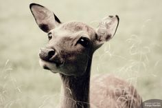 Bambi-Augen. Bambi, Lost & Found, Goats, Cow, Eyes, Pictures, Photography, Animals, Photos