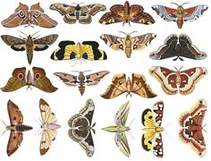 Colorful Moths, Types Of Moths, Largest Butterfly, Halloween Clipart, Ceramic Artists, Stoneware, Decals, Ceramics, Pottery