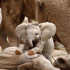 25+éléphanteaux+qui+vous+donneront+instantanément+le+sourire.