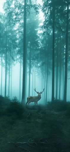 Cervine woods forest is quiet only beautiful Wallpapers for iPhone X, iPhone XS and iPhone XS Max - Free Wallpaper | Download Free Wallpapers