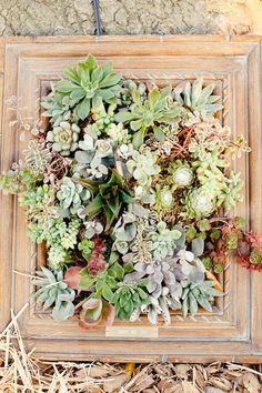 Another succulent garden in a picture frame.  I should try to find a really awesome picture frame.  I wonder how much work goes into making a vertical garden?