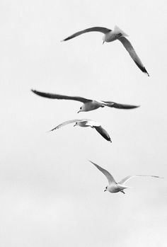 *nature, birds, black and white photography* - To Be Free 2 by alicieh on… Animals Tattoo, Kunst Inspo, White Aesthetic, Black And White Photography, The Little Mermaid, Seaside, Beautiful, Wedding Themes, Diy Wedding