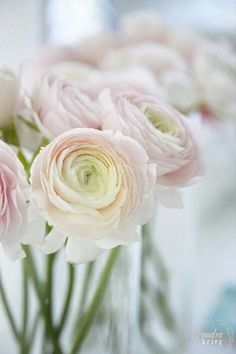 Most current Totally Free ranculus Ranunculus Tips When flowering lamps are one involving nature's secrets, enjoying the claw-like tuber on the ranunculus del Light Pink Flowers, Blush Flowers, Little Flowers, May Flowers, Flower Petals, Spring Flowers, Pink Roses, Beautiful Flowers, Wedding Flowers