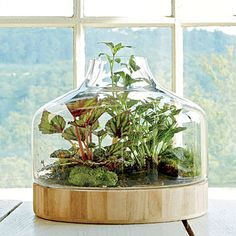 Plant a Little Glass House | Terrariums are back, and they are as endearing as ever. There is no better way to minimize care while celebrating plant details. Those with an opening in the glass will need more frequent watering, but they minimize the risk of mold developing if too much water is added.