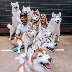 So many of them. Tag someone to see this Follow us @huskyroad . . . . Credit: @lauraingham_ #siberianhusky #huskies #husky #dogs #huskiesofinstagram . #siberianhuskypuppy #thehuskylove_feature #huskyloversunite #huskylifestyle #huskysiberiano #huskysnow #huskysiberian #huskyproblems #huskydog #huskys