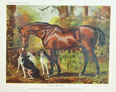 Antique Horse Print Fox Hunting Chestnut by PaperPopinjay on Etsy