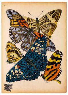 E. A. Seguy butterflies
