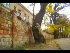 Spiderman Dog Is Unstoppable  August 12, 2012 Global Animal    (ANIMAL VIDEO) This dog from the Ukraine can do more amazing parkour feats than most people. And those doggie goggles don't look half bad either! — Global Animal    96     0     0  stumbleupon     0     97