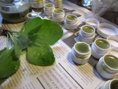 Essential knowledge for all Herbalists – Herbal Practices Infused Oils, Jar Labels, Fresh Rolls, Shea Butter, Coconut Oil, Herbalism, Knowledge, Vodka, Herbs