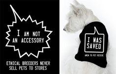 My Animal Activist | Dog Milk