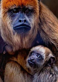Rare Animals, Animals And Pets, Funny Animals, Mother And Baby Animals, Cute Baby Animals, Monkey Types, Los Primates, Amazing Animal Pictures, Photo Animaliere