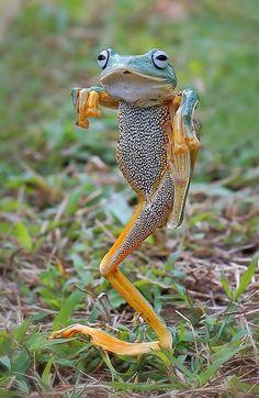 Kung fu froggy!