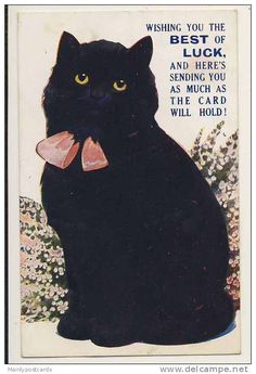 In England black cats are good luck