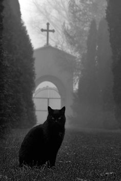 black cat in a dark cemetery. Crazy Cat Lady, Crazy Cats, Saint Yves, Old Cemeteries, Graveyards, Photo Chat, Tier Fotos, Dark Photography, Animal Photography