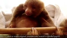 True Facts About Sloths (this is hilarious and ridiculously cute at the same time)