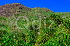 Qdiz Stock Photos Palms in Mountain,  #blue #Canary #day #green #island #leaf #mountain #nature #palm #plant #rock #sky #Spain #spring #summer #Tenerife #tree