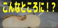 りんごをパッカーンと割ったら種が変なところにありました。I am lucky man カネちゃんのテレビ