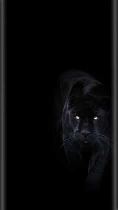 Animal Wallpapers Iphone Wallpapers Black Panther In 2019