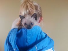 Foster kitten Simone loves to snuggle around your neck. #rescue #adoptdontshop #kitten #kittycat #simone #kittenscarf