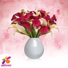 Mini Callas White and Hot Pink Pack 80 stems - EbloomsDirect Calla Lily Flowers, Fall Flowers, Cut Flowers, Fresh Flowers, Flower Vases, Wedding Flowers, Calla Lilies, Bulk Flowers Online, Classic Romantic Wedding
