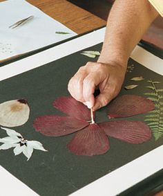 Make art with pressed flowers. The author not only adorns her stationery with pressed flowers, she creates and frames pressed flower designs. Leaf Crafts, Flower Crafts, Crafts To Do, Diy Flowers, Dried And Pressed Flowers, Pressed Leaves, Pressed Flower Art, Fleurs Diy, Fine Gardening