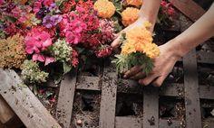 idée de mur végétal en couleurs