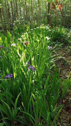 Loving the Swamp - FineGardening Bog Garden, Ferns Garden, Shade Garden, Ponds Backyard, Backyard Landscaping, Rain Garden Design, Different Types Of Fences, Backyard Sitting Areas, Bog Plants