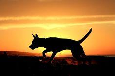 Playing at sunset Photo by Emanuele Del Bufalo -- Dog Sun
