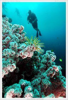 Scuba Diving with Go Dive Lanta Ko Lanta Krabi THAILAND. www.godive-lanta.com http://ift.tt/2bEVQaJ