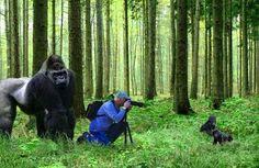 Funny Photographer Gorilla Mother