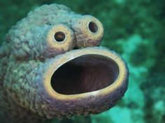 Diver photographs 'Cookie Monster of the Sea' | GrindTV.com