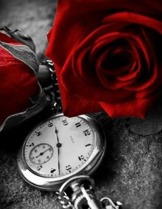 black and white photography with red color splash Black White Red, Red And Grey, Red Color, Color Pop, Colour, Rose Clock, Splash Photography, 5d Diamond Painting, Shades Of Red