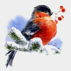 Birds by Alex Yermolin, via Behance - Illustration - kunst Christmas Bird, Christmas Drawing, Christmas Paintings, Christmas Pictures, Watercolor Bird, Watercolor Animals, Watercolor Paintings, Pretty Birds, Beautiful Birds