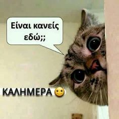 Kalimera Funny Greek Quotes, Funny Memes, Jokes, Love Hug, Color Psychology, Good Morning Quotes, Picture Quotes, Make Me Smile, Animal Kingdom