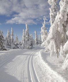 Winter Love, Winter Is Here, Winter Child, Stavanger, Trondheim, Winter Fairy, Ski Season, Snowy Day, Snow Scenes