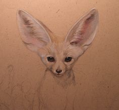 Fennec Fox drawing by Esther Garcia of Butterfat Studios Chicago