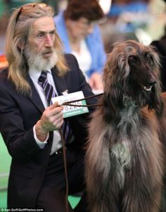 Usually, it is said that dog owners bear a striking resemblance to their pets but now researchers have asserted that they even act like them.The study of British dog owners has revealed that people are inclined towards choosing animals that mirror. Find Your Spirit Animal, Spitting Image, Drag, Afghan Hound, Kinds Of Dogs, Like Animals, Dog Show, Look Alike, Whippet
