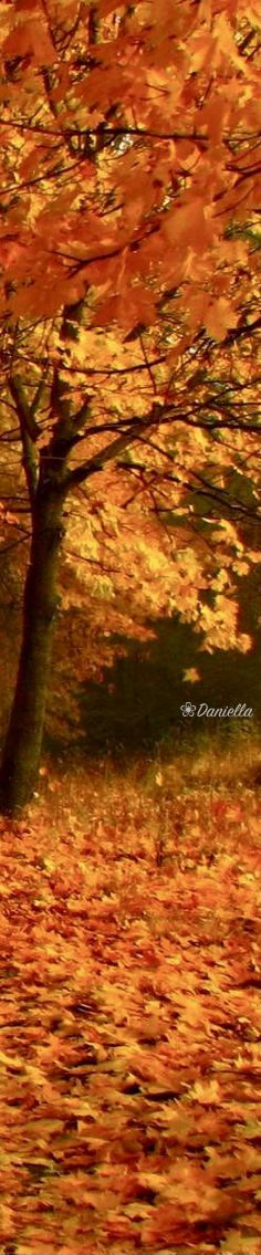 Fall Secenery #Fall #Scenery #Autumn #GoldenLeaves #BeautyOfFall Seasons Poem, Seasons Of Life, Four Seasons, Orange Leaf, Golden Leaves, Fall Is Here, Harvest Time, Scenery, Country Roads