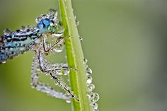 macro-dew-covered-insect-photos-8