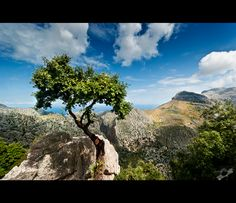 The tree of knowledge by *Bojkovski