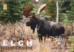 ELCH. - CALVENDO Kalender - #elche #kanada #kalender