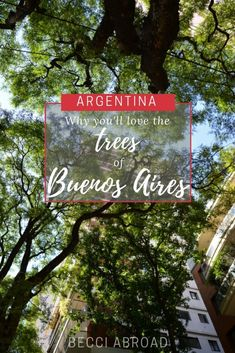 The trees of Buenos Aires is one of the most outstanding things when visiting the Argentine capital – you will love them, I'm sure! New Adventure Quotes, San Francisco Travel, Argentina Travel, Restaurant, New Travel, Travel Information, Love Notes, Vacation Trips, Latin America