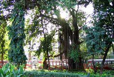 The Hanging Gardens, located in Mumbai, India.