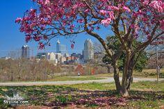 Springtime in Raleigh