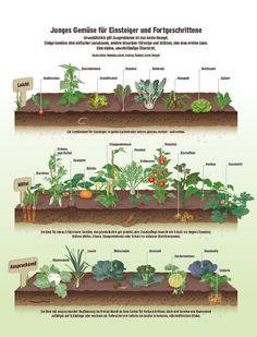 Zum Niederknien, wie gut frische Erde riecht! Wie stolz man auf den eigenen Garten ist. Und wie köstlich selbstgezogene Bohnen schmecken! Tipps und Tricks für Einsteiger.