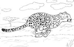 The Speedy Cheetah Coloring Pages. The cheetah is an exciting animal that does not go unnoticed by anyone. Get the cheetah coloring pictures on this page with n Zoo Animal Coloring Pages, Family Coloring Pages, Puppy Coloring Pages, Heart Coloring Pages, Cat Coloring Page, Free Coloring Sheets, Coloring Pages For Girls, Mandala Coloring Pages, Coloring Pages To Print