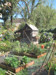 French Knots: chicken coop & potager gardening